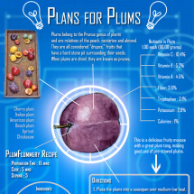 Plans for Plums Infographic