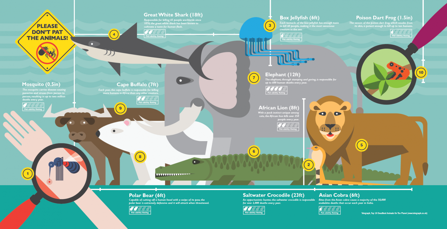 Please don't pat the animals Infographic