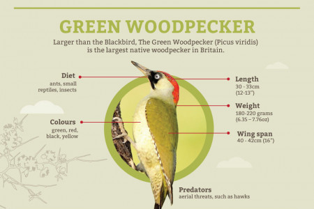 Popular British Wild Birds Infographic
