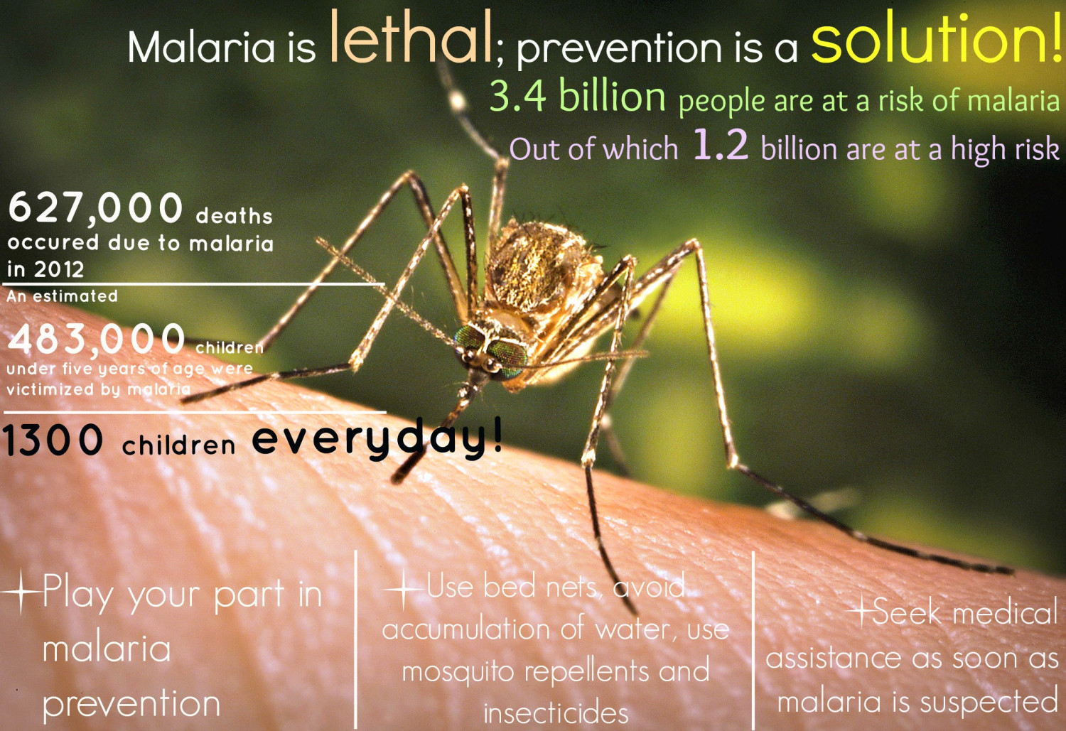Prevention from Malaria Infographic