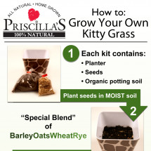 Priscilla's: How to Grow Your Own Kitty Grass Infographic