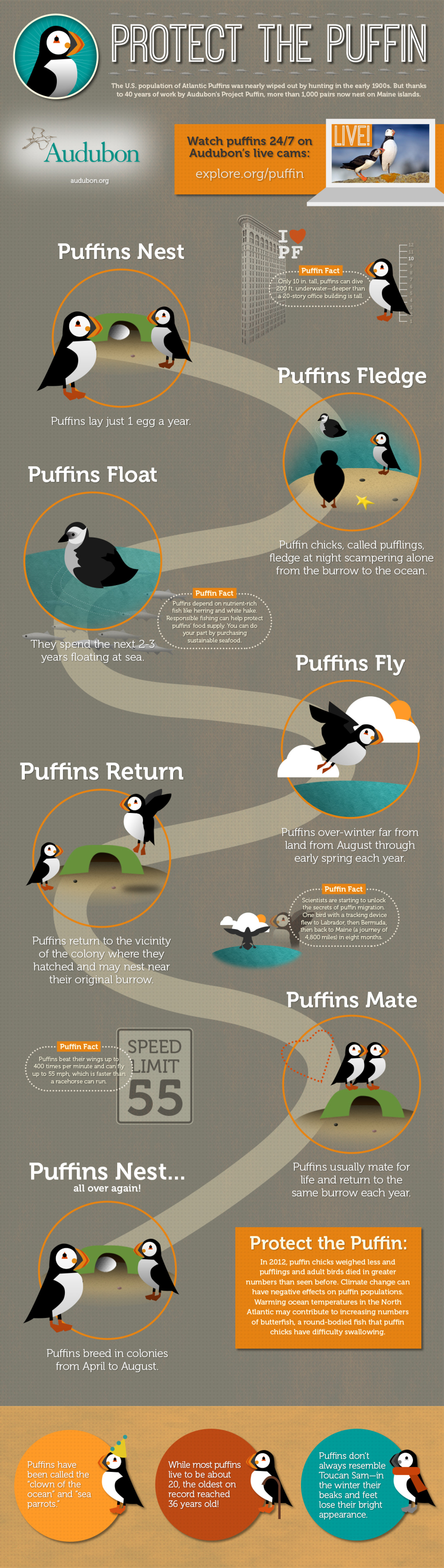 Protect the Puffin Infographic