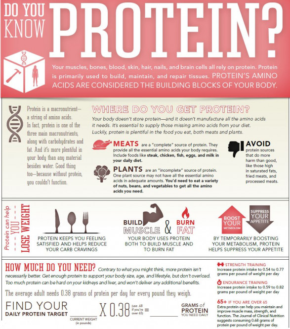 Protein, The Building Blocks Of Your Body