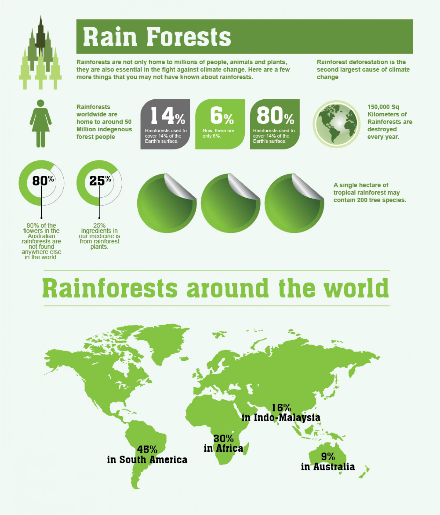 Rainforests: Facts and Figures Infographic