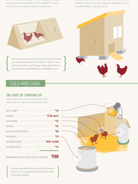 Urban Chickens Infographic