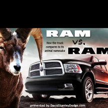 RAM vs RAM – The award-winning truck compared to its animal namesake (infographic) Infographic