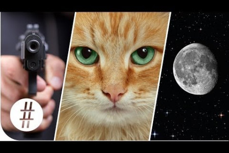 Random Numbers: Guns, Cats & the Moon  Infographic