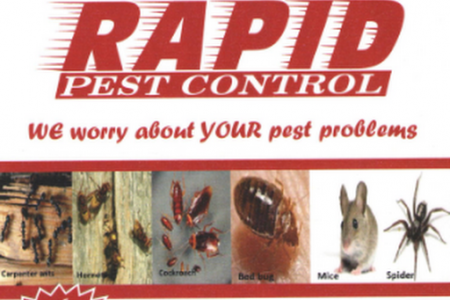 rapid pest control Infographic