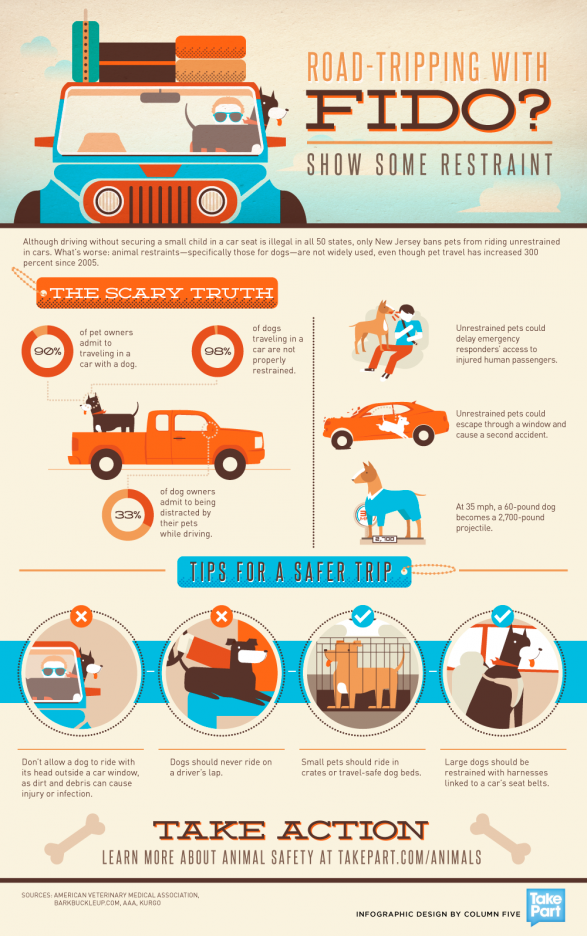 Road-Tripping with Fido? How to Safely Travel With Your Pet
