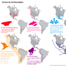 Rutas de Intercambio Infographic