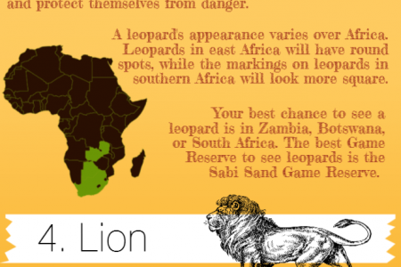Safari Animals - The Big Five Infographic