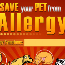 Save your pet from Allergy Infographic