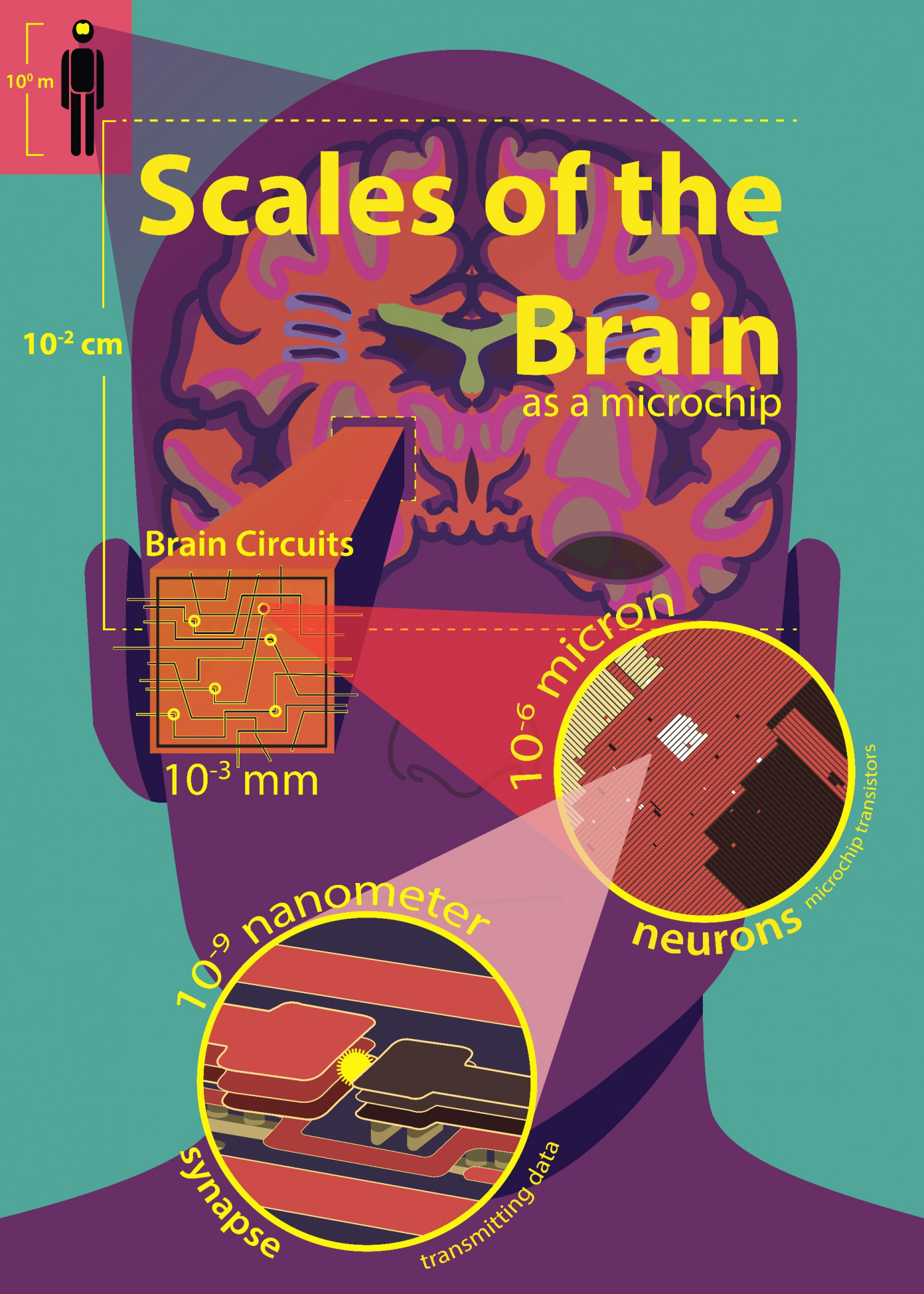 Scales of the Brain Infographic