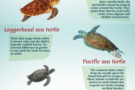 Sea Turtles Species in Costa Rica Infographic