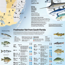 Seafood Safety Infographic