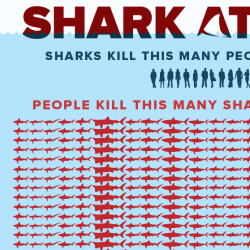 Shark Attack | Visual.ly