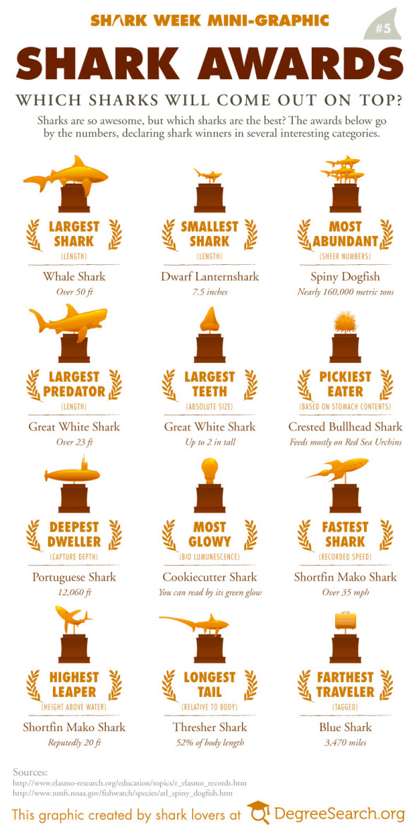 Shark Awards Infographic