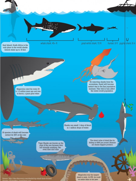 Shark eco-system Infographic
