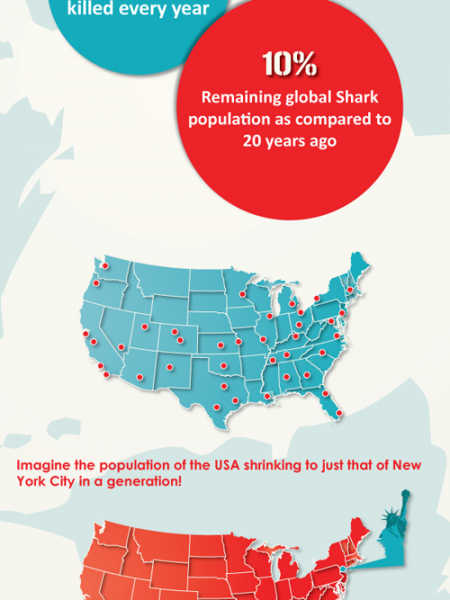 Shark Extinction Infographic