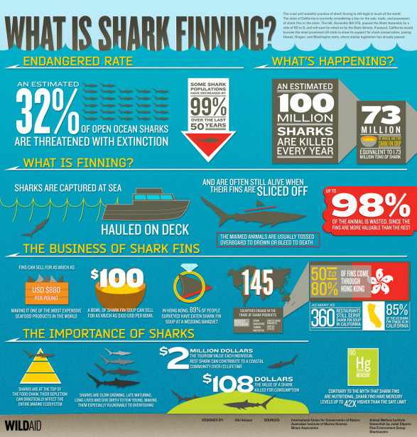 Shark Finning