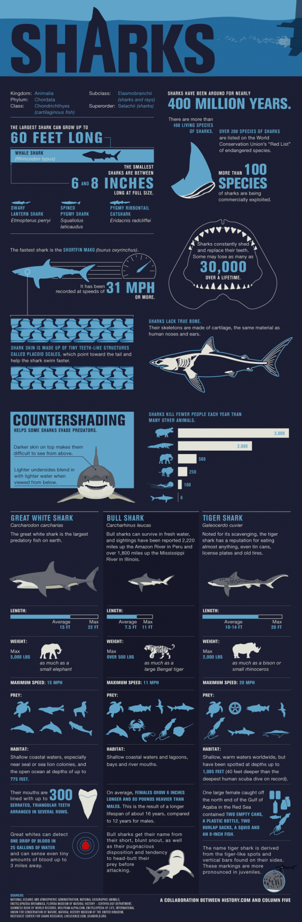 Shark Wranglers Infographic
