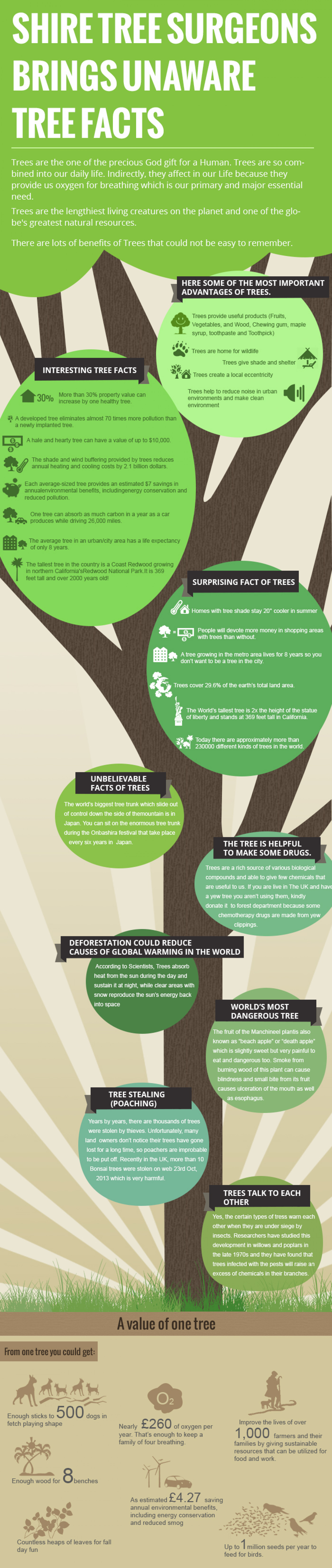 Shire Tree Surgeons Brings Unaware Tree Facts Infographic