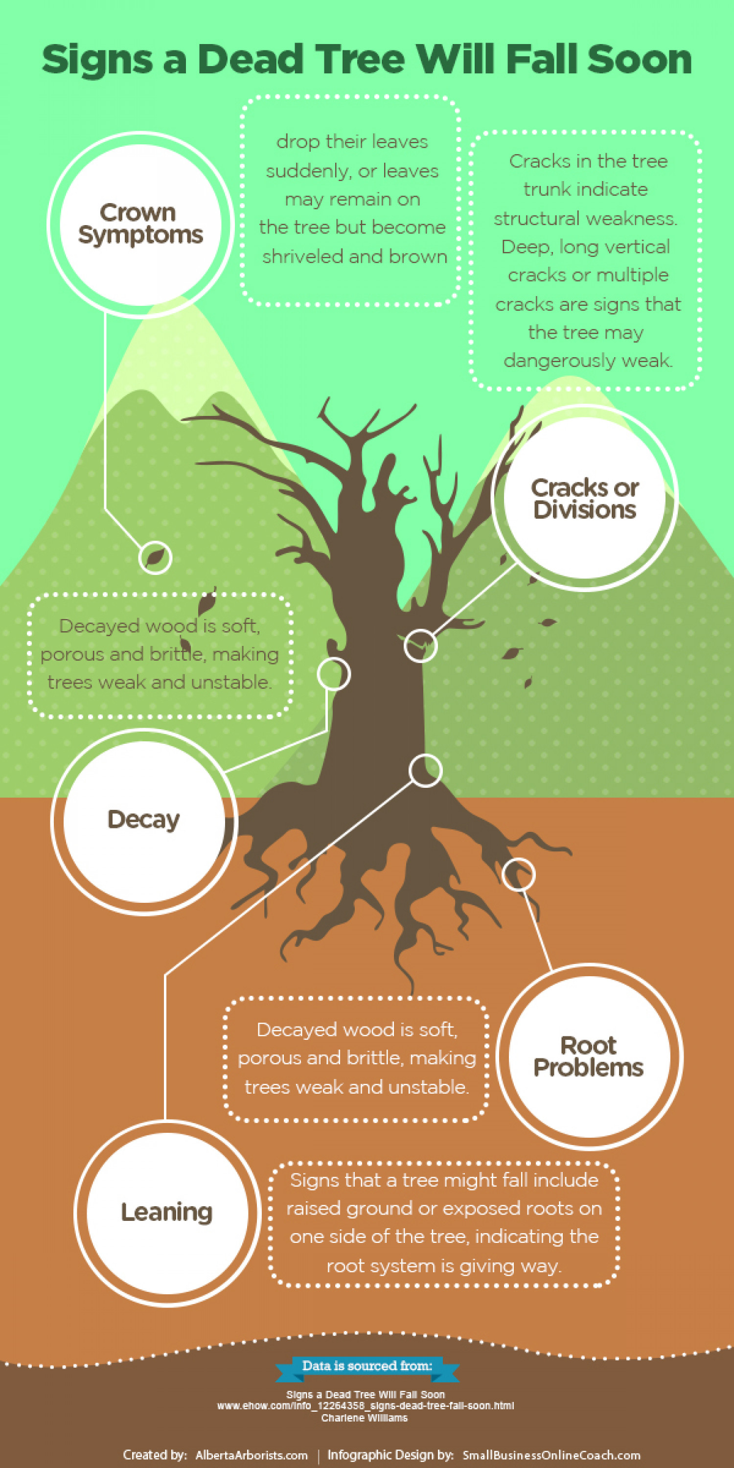 Signs a Dead Tree Will Fall Soon Infographic