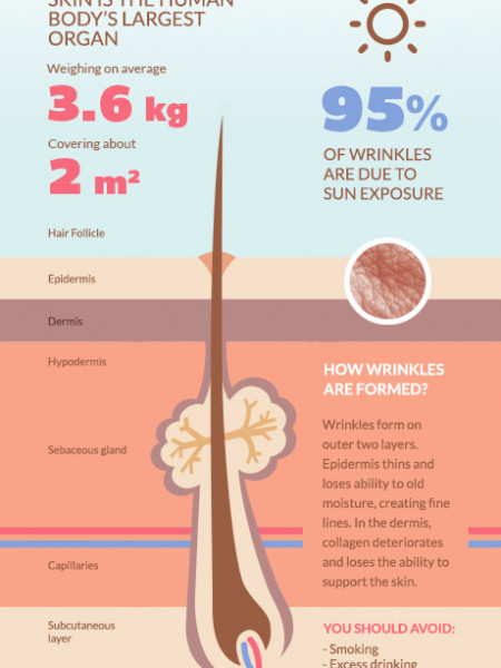 Skin Facts You Should Know Infographic