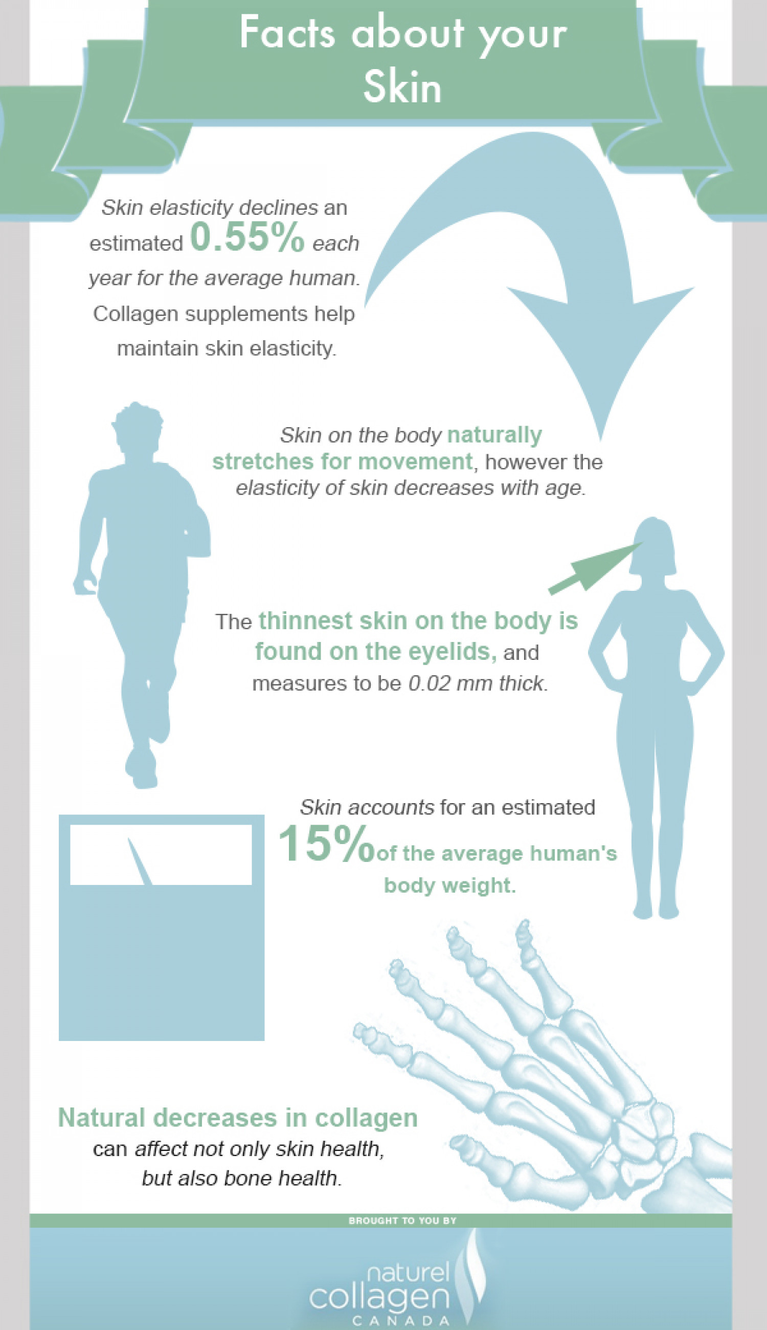 Facts about Your Skin Infographic
