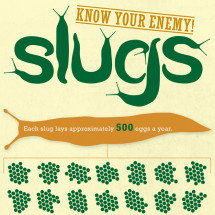 Slugs: Know Your Enemy Infographic