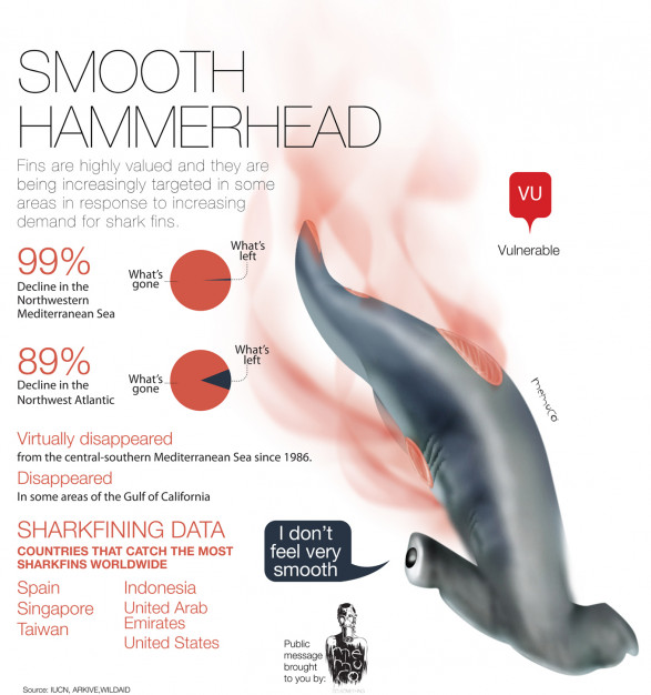 Smooth Hammerhead