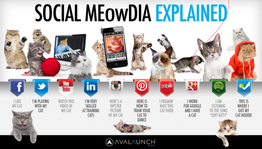 Social Media Explained by cute cats