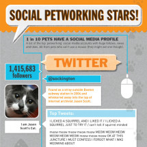 Social Petworking Stars Infographic