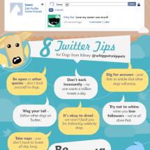 Social Savvy Critters Infographic