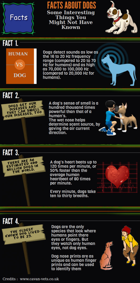 Some Interesting Dog Facts