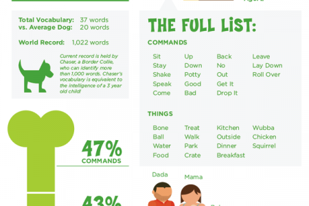 Speak! Words & Phrases my dog understands Infographic