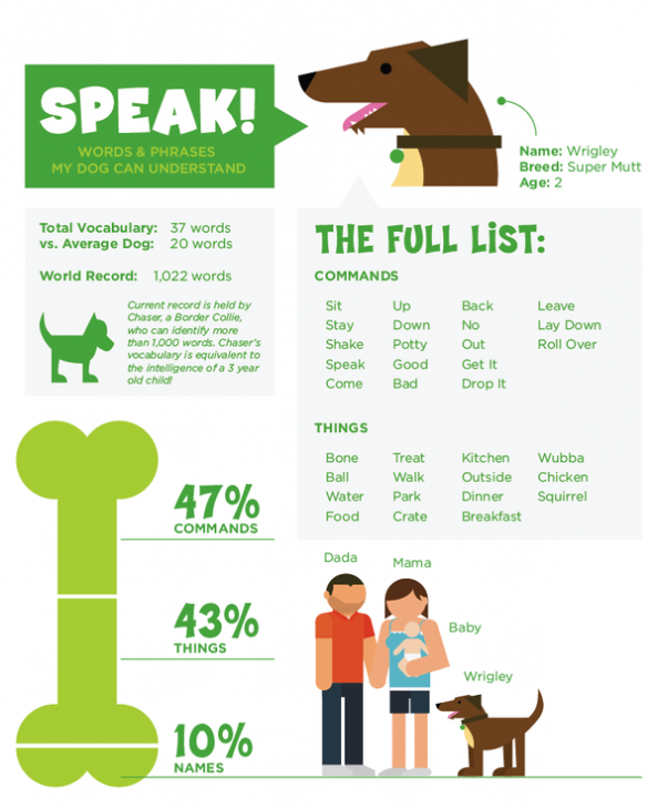Speak! Words &amp; Phrases my dog understands Infographic