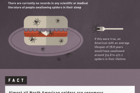 Spiders: Fact & Myth Infographic