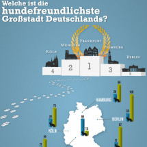 Stadthunde Infographic