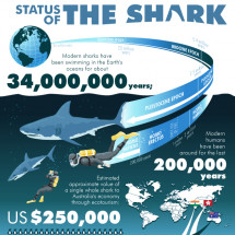 Status of the Shark  Infographic