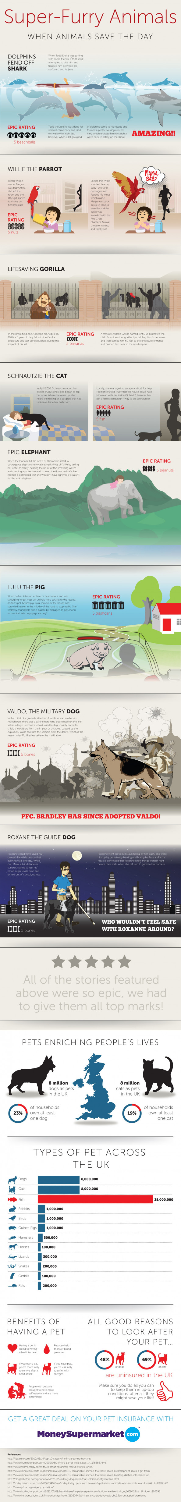 Super Furry Animals Infographic