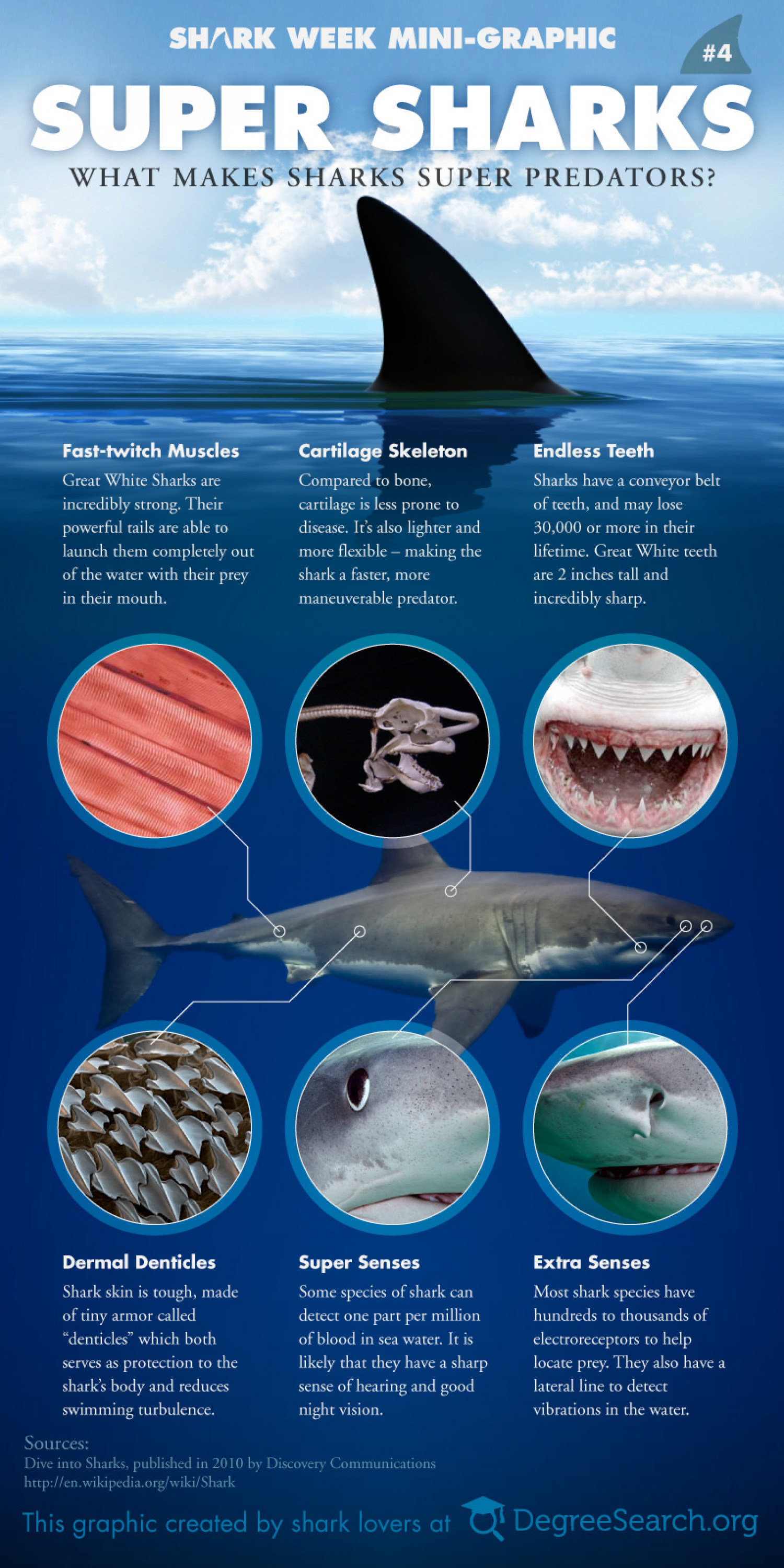 Super Sharks - What Makes Sharks Super Predators? Infographic