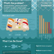 Sustainable Seafood & Sushi Infographic