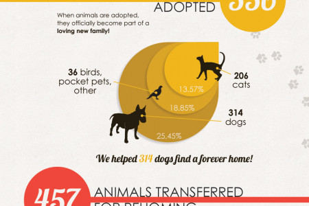 Sydney Dogs and Cats Home Infographic