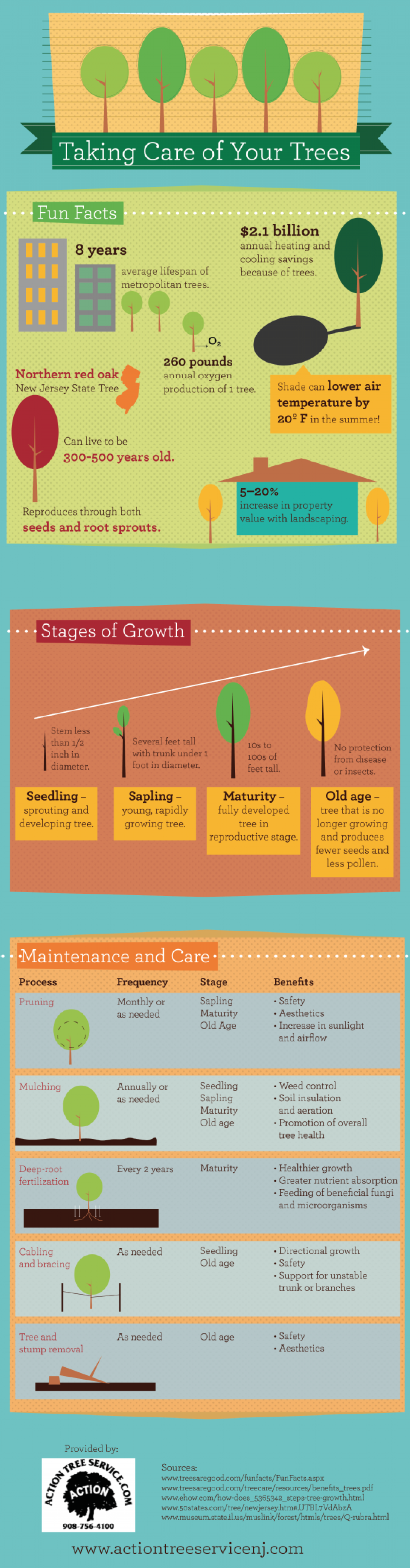 Taking Care of Your Trees Infographic