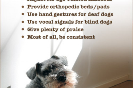 Teaching Old Dogs New Tricks Infographic
