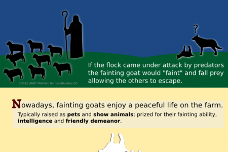 The Amazing Fainting Goat! Infographic