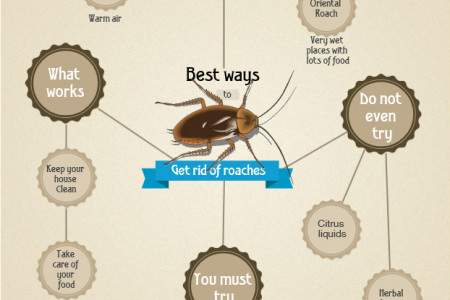 The Best Way to Get Rid of Roaches Infographic