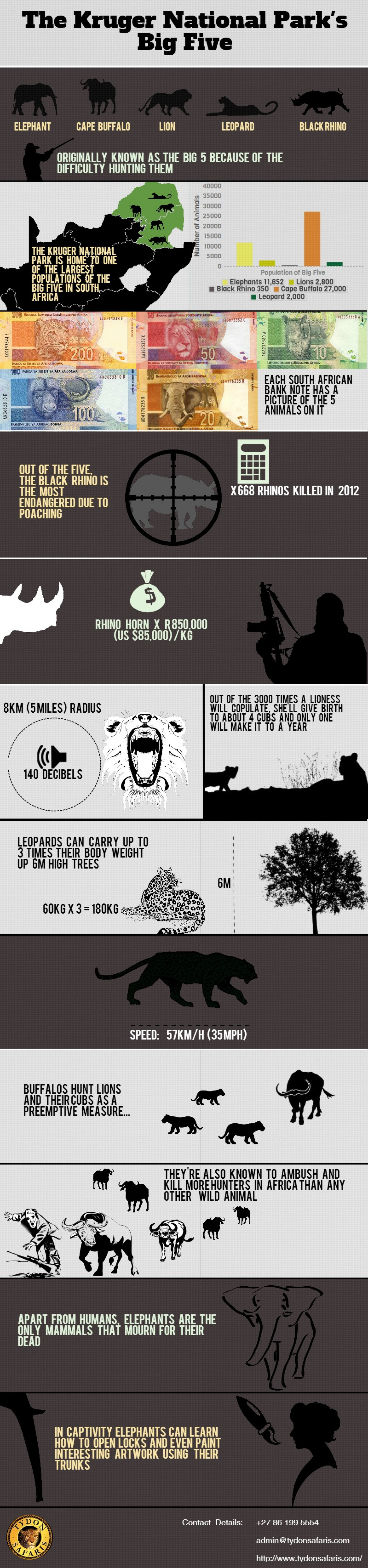 The Big Five  Infographic
