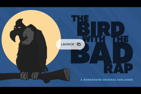 The Bird With The Bad Rap Infographic
